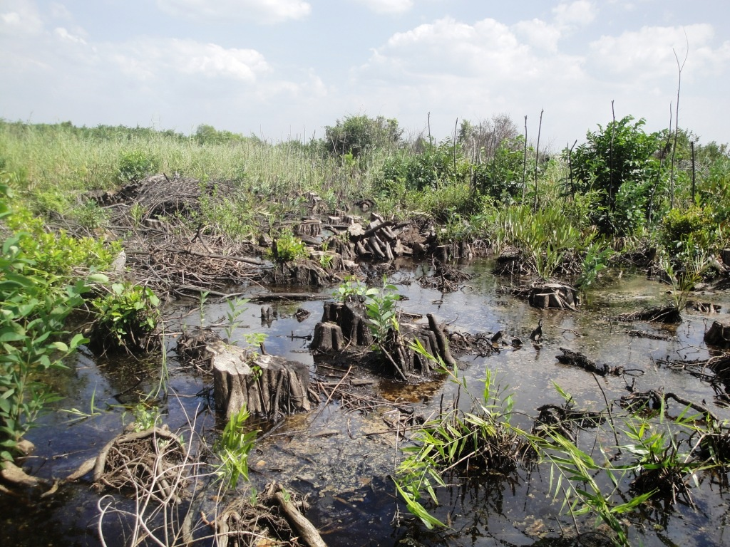destruction of ecosystem The iucn is working on establishing a red list of endangered ecosystems as an analogue to their madagascar has witnessed the destruction of an estimated 80.