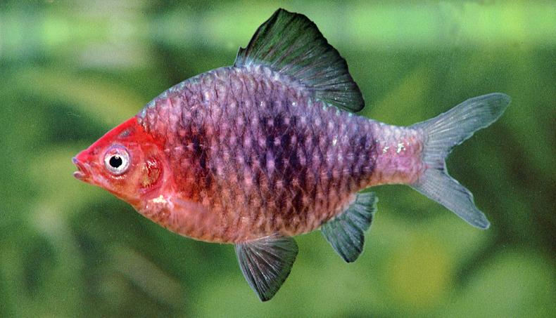 Freshwater Fish Window To Nature