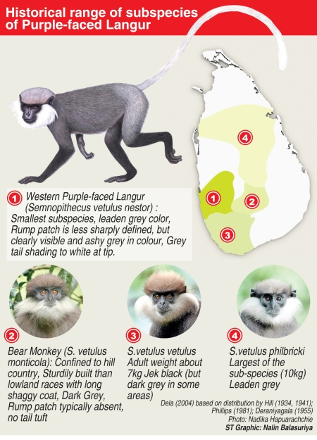 Range of different subspecies of Purple-faced Leaf-langur
