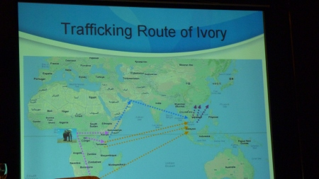 2 Trafficking route of ivory