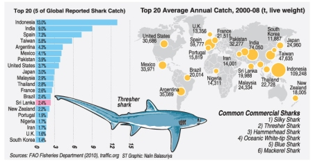 SharkGraphic