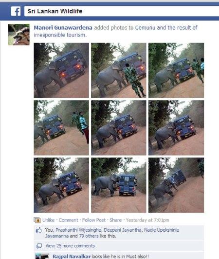 Sri-Lankan-Wildlife-page-on-FB