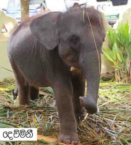 Microsoft Word - Elephant
