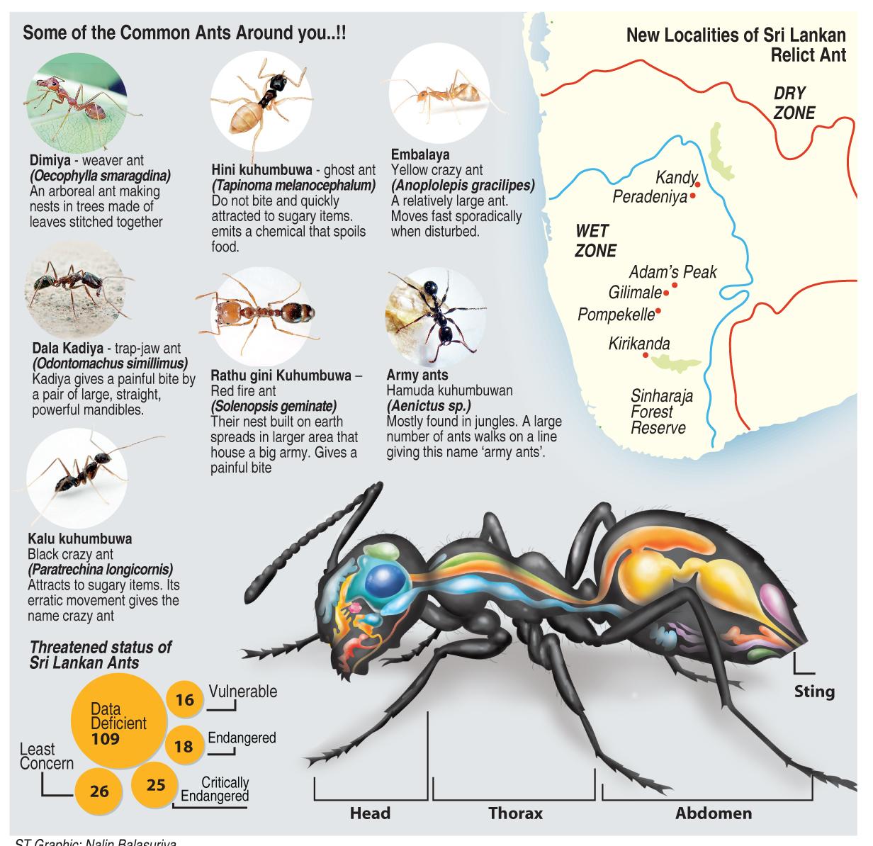 Dengue Fever: Cause, Symptoms and Home Remedies