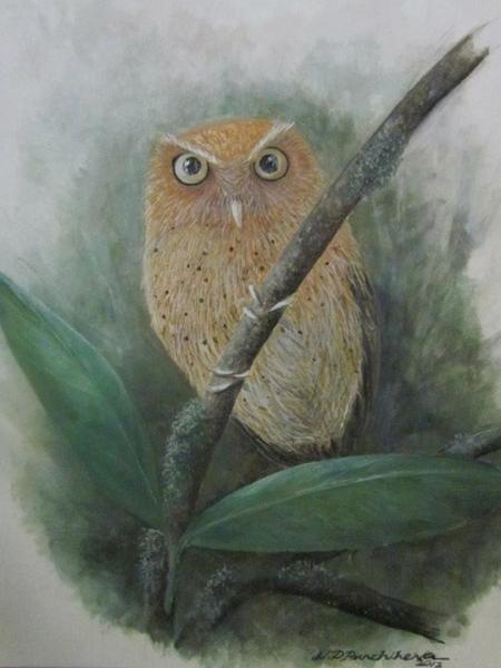An owlet