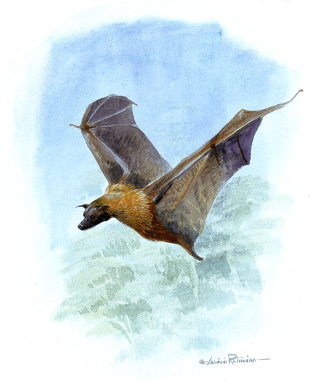 A species of Bat - a Flying Mammal