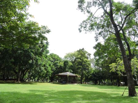 Tour of Trees - Section of trees of Vihara Maha Devi Park 2