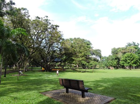 Tour of Trees - Vihara Maha devi park