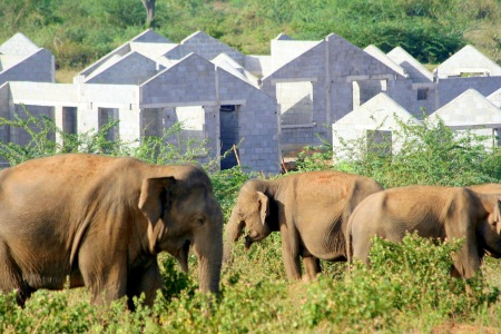 Housing scheme in elephant territory - intensifying the conflict