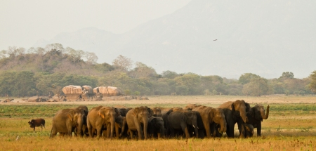 Kalawewa is particularly famous for tuskers © Rajiv Welikala