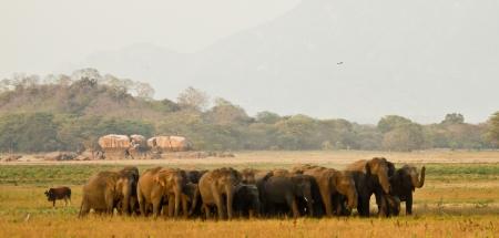 Kalawewa is particularly famous for tuskers © Rajiv Welikala