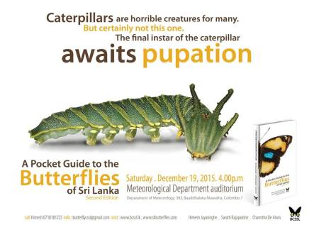 Butterfly Pocket Guide - await pupation