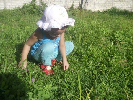 2016, WED - plucking nidikumba flower 3