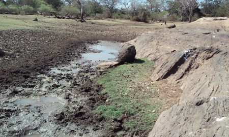 The drying water holes