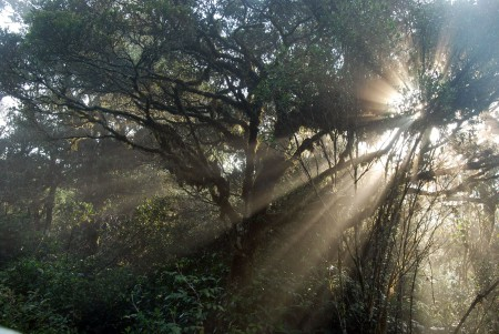 rays-of-sun-penetrating-cloud-forest
