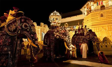 Elephants in Esela perahera of Sri Dalada Maligaya (c) newsfirst.lk