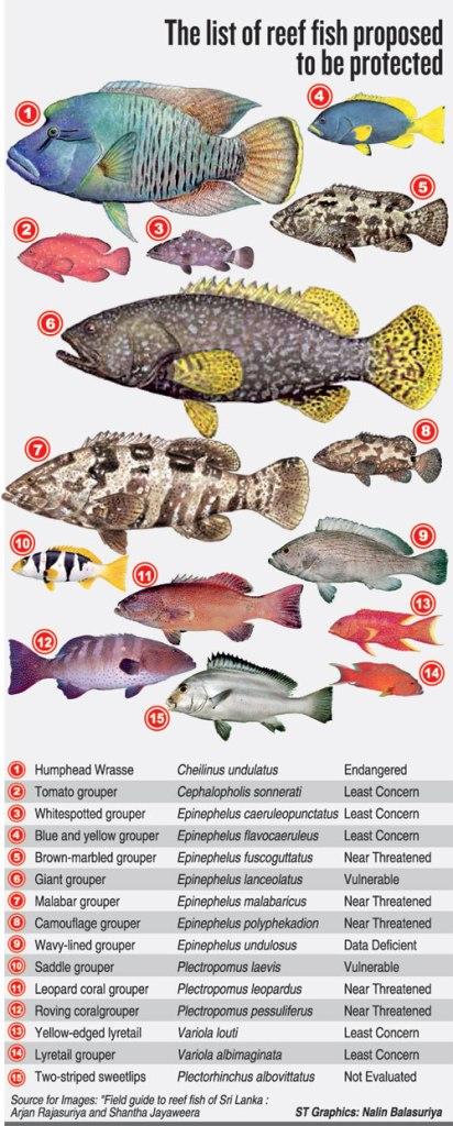 List of reef fish Sub-Aqua Club requests to protect